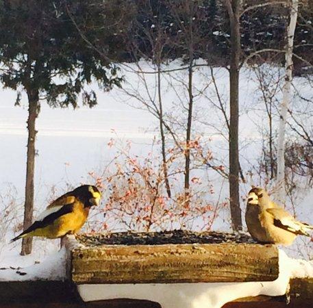 Blue Heron Bed & Breakfast: Breakfast Companions.