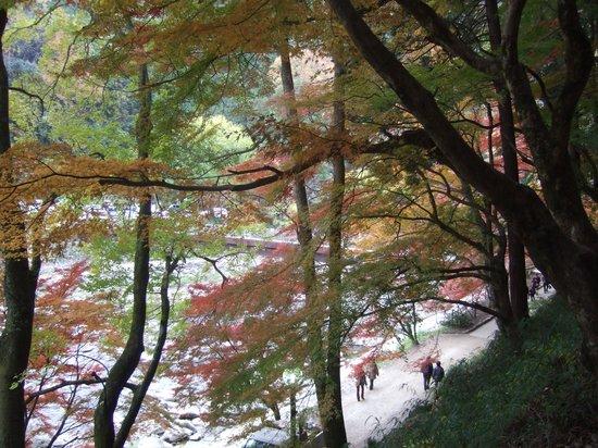 Kojakuji Temple : 山門への階段から振り返ると