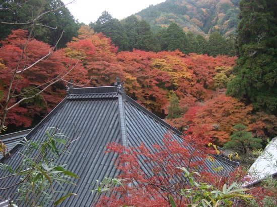 Kojakuji Temple : お寺を取り囲む見事な紅葉