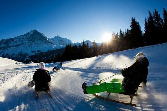 Grindelwald, Sveits: Schlittelspass Bussalp