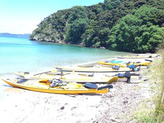 Bay of Islands Kayaking: Lunch time break