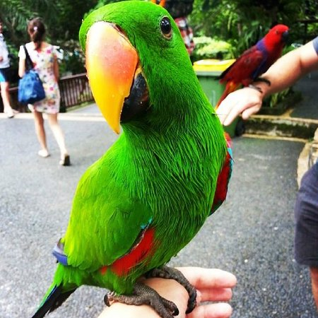 Bali Zoo: One of the friendly birds