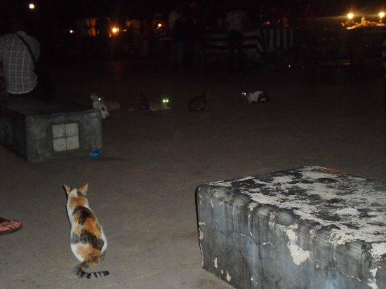 Forodhani Gardens : The cats!!