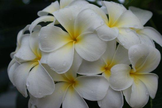 Jubawa Home Stay : Много цветов не территории.