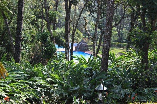 Carmelia Haven: Pool surrounded with lush green vegitation