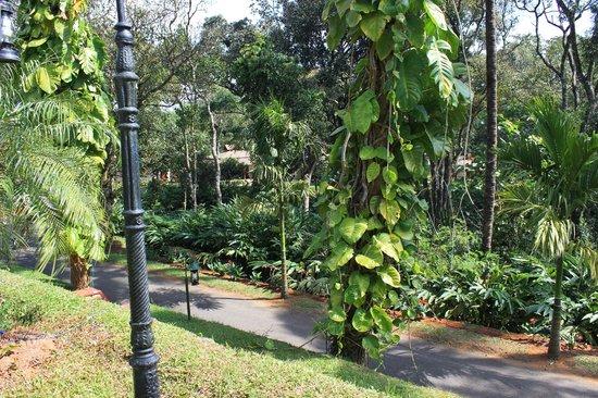 Carmelia Haven: Plantation