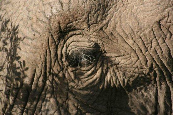 Kariega Game Reserve - All Lodges: Ellie up&close