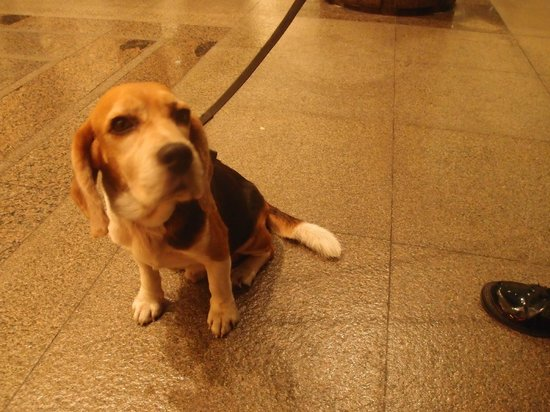 Makati Shangri-La Manila : Adorable dogs