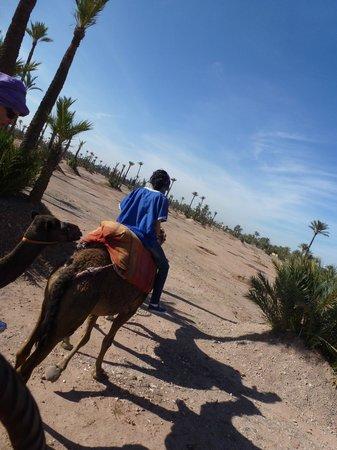 Dar Sabra Hotel Marrakech: La Palmeraie.
