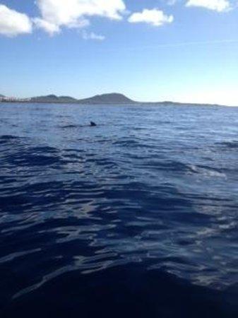 Los Cristianos Harbour : Pilot Whales in Los Cristianos