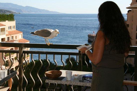 Columbus Monte-Carlo : Notre amie babeth la mouette venait nous voir chaque jour...