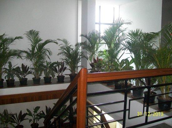 The Kormangala Residency : Area near stairs