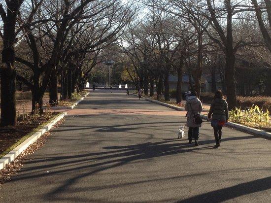Fuchunomori Park: 公園端の噴水