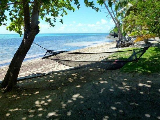 Mai Dive - Astrolabe Reef Resort: Mai Dive Hammock