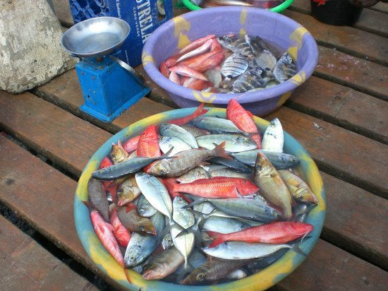Hotel Oasis Belorizonte : retour de pêche