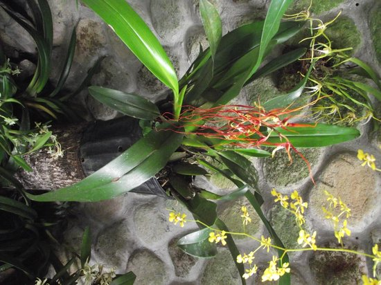 Aprovaca (The Orchid Nursery & Conservation Center) : One of the orchids that was blooming and on display