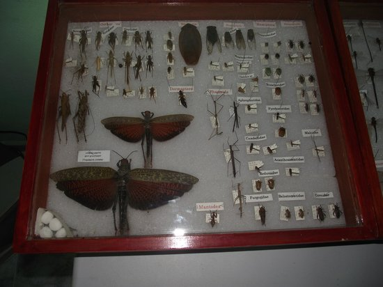 Aprovaca (The Orchid Nursery & Conservation Center): Some of the pollinating insects.