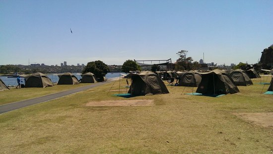 Cockatoo Island Camping: A view of the tents