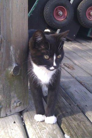 Farm Fun: Black nice cat