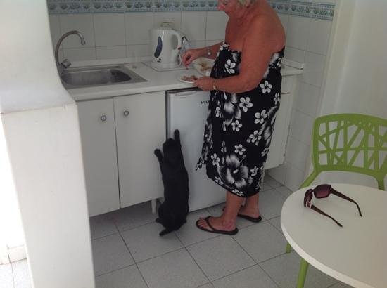 Marconfort Atlantic Gardens Bungalows: kitchen area.......with my little friend Sooty came to see me daily!!