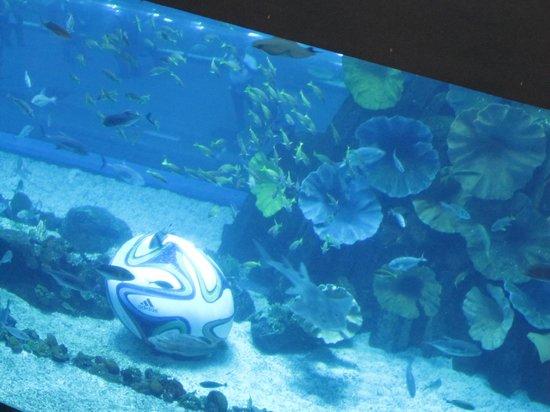 The Dubai Mall : Dubai Aquarium