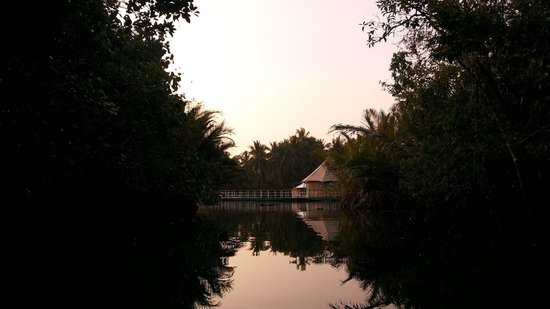 4 Rivers Floating Lodge: Peek out from mangrove delta