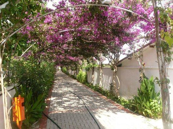 Alaiye Resort & Spa Hotel: Walkway to the beach