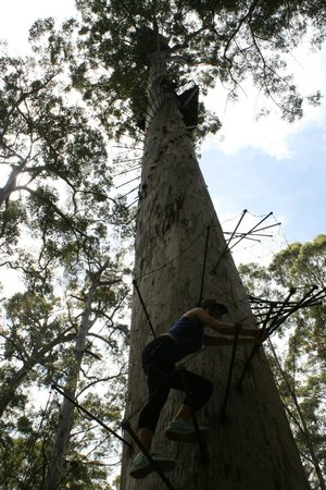 Dave Evans Bicentennial Tree: Top platform of the Bicentennial Tree