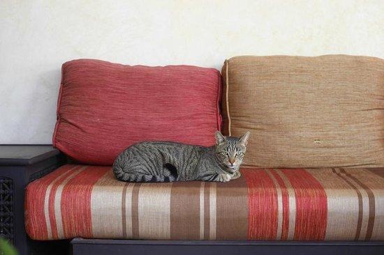 Origin Hotels Riad El Faran: Companions