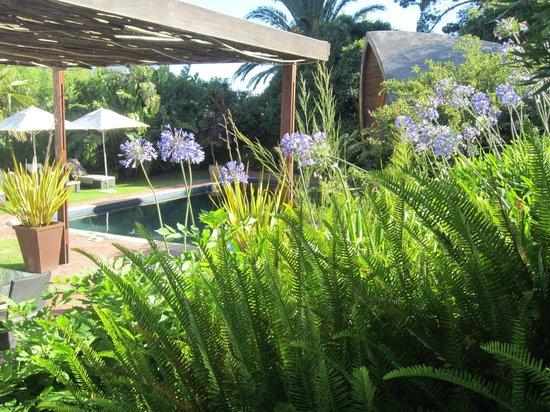CUBE Guest House: Vue sur piscine et salle à manger extérieure