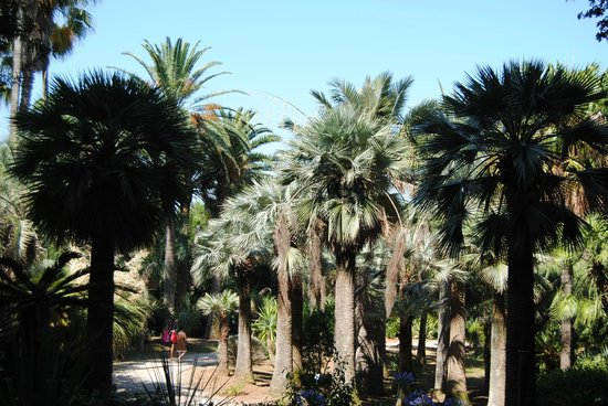 Camping Village Rosselba le Palme: The Botanical Garden