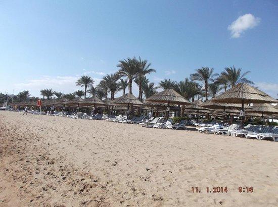 the beach at the hilton sharm dreams resort