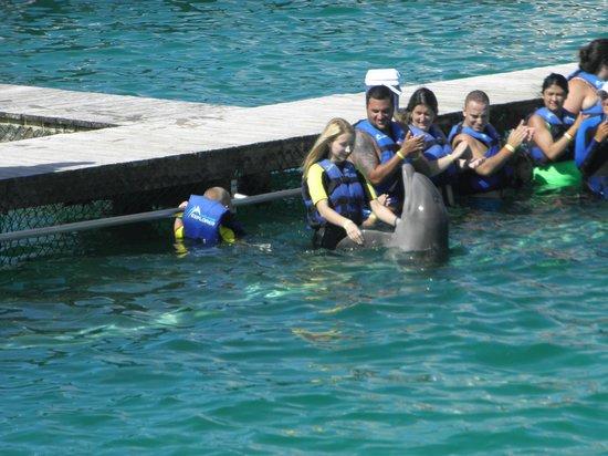 Grand Bahia Principe Punta Cana: дельфинарий в открытом океане