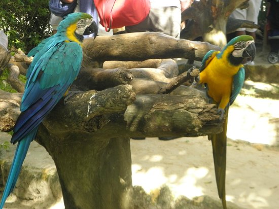 Grand Bahia Principe Punta Cana: попугаи))