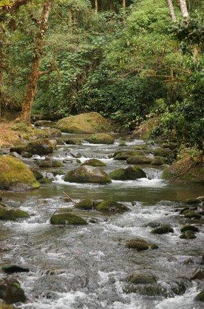 Savegre Hotel, Natural Reserve & Spa: 滝までのトレイル、雨降りでもアクセスできましたが