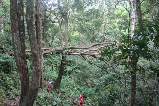 The Sleeping Indian Girl: Hike thru this forest
