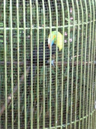 Hotel Rincon Vallero: playful toucan