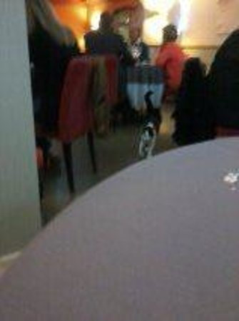 La Grande Mare: Cat in restaurant