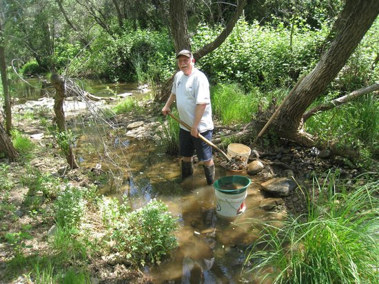 California Gold Panning: Digging