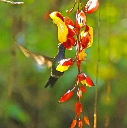 Pousada Tropicana: Garden - Jardim