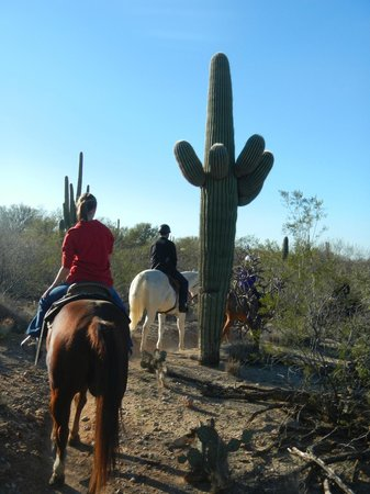 Houston's Horseback Riding: Afternoon ride in Saguaro