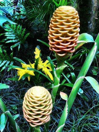 Pousada Tropicana: Garden