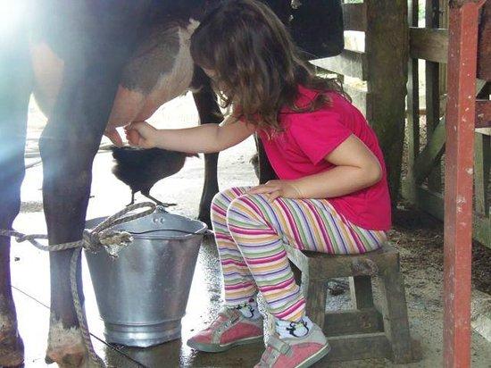 Hotel El Silencio del Campo: My daughter milking the hotel's cow.