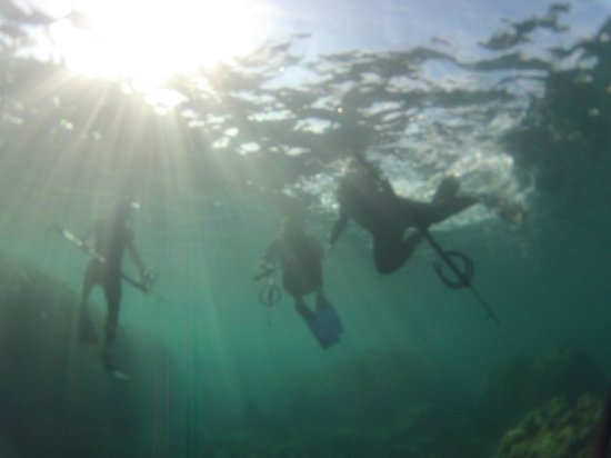 South Maui Spearfishing - Private Excursions: Bring your camera!