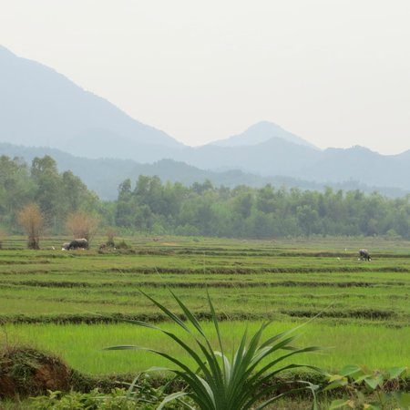 Heaven and Earth Bicycle Tours: very nice ricefields