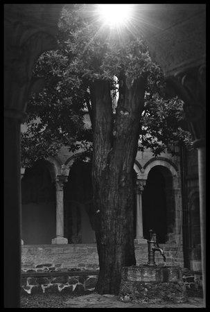Abbazia di Piona : fonte e quercia