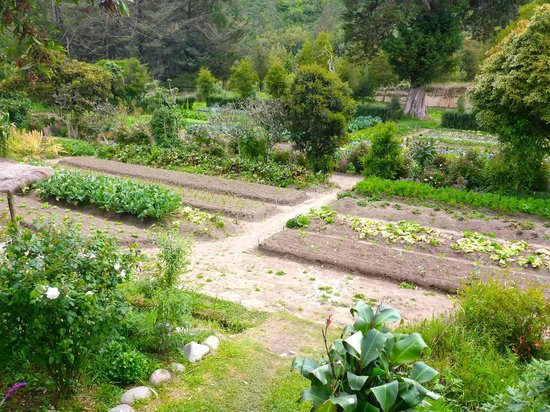 Hacienda Zuleta: Organic garden