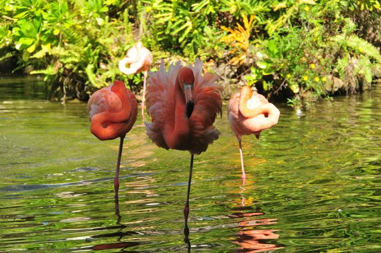 Paradisus Palma Real Golf & Spa Resort: un poco sacrificados pero... bonitos