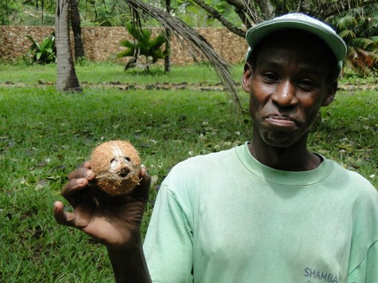 Shambani Cottages: Gardener preparing fresh coconut.