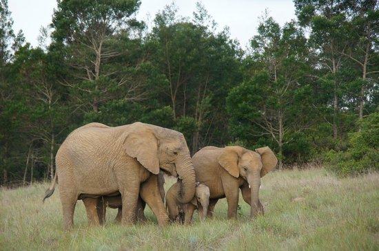 Kichaka Luxury Game Lodge : Elephant and baby